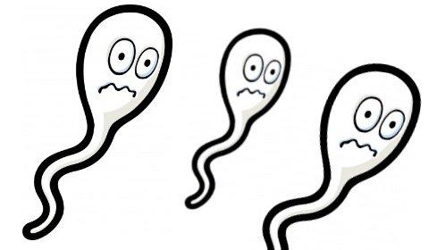 sperm อสุจิ เพศศึกษา เพศสัมพันธ์