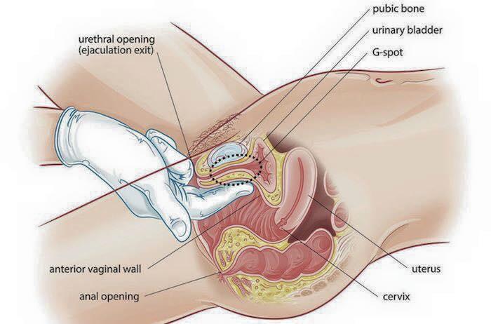 G spot กับ Clitoris
