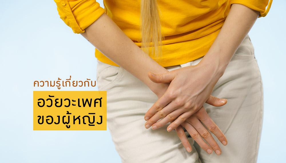 sex จิ๋ม จิมิ สุขศึกษา เพศศึกษา เพศสัมพันธ์