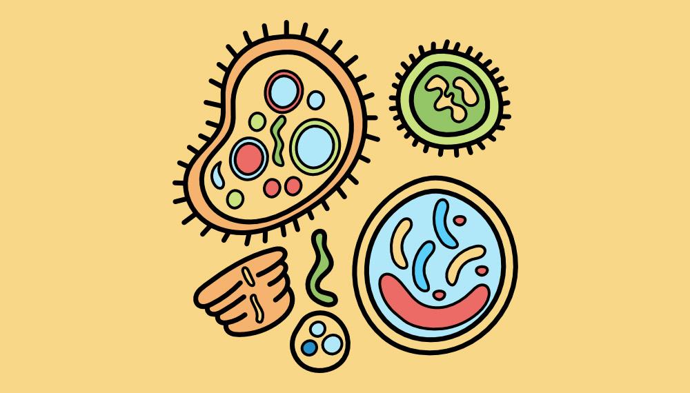 mers สร้างสุขภาพดี ไวรัสเมอร์ส