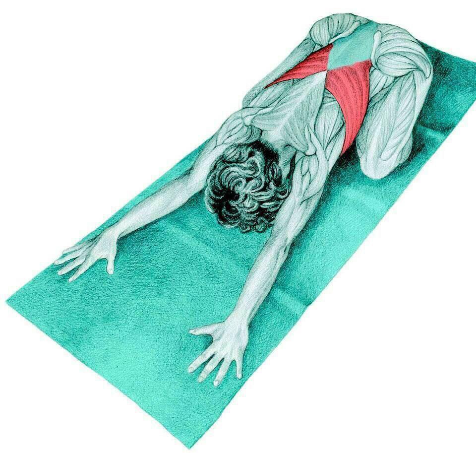 17 ท่าโยคะ ยืดเส้น บริหารกล้ามเนื้อหลักๆ ในร่างกาย