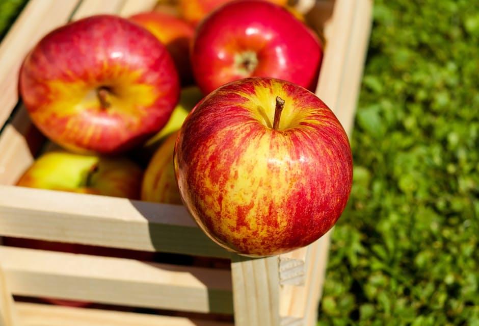 Apple ผลไม้ พัฒนาสมอง แอปเปิ้ล