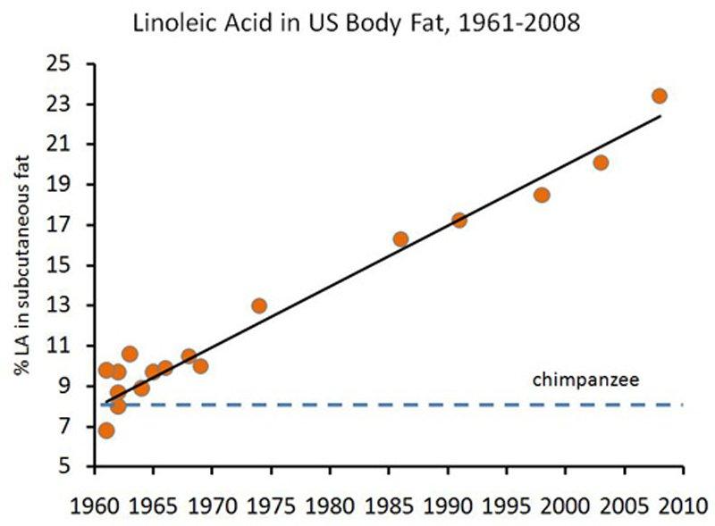 กรดไขมันในน้ำมันพืชยุคใหม่ ไม่เหมาะกับร่างกายเรา