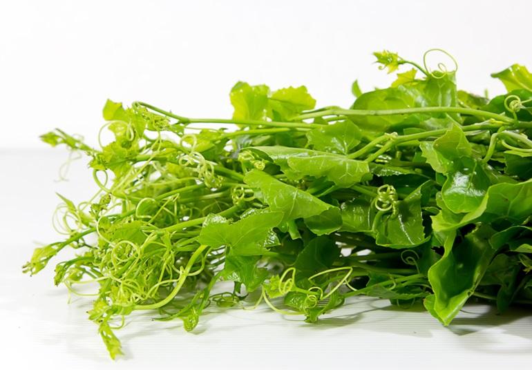 ตำลึง ผัก ผักสีเขียว