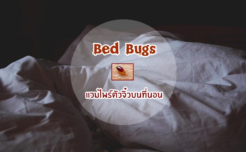 Bed Bugs ที่นอน เรือด