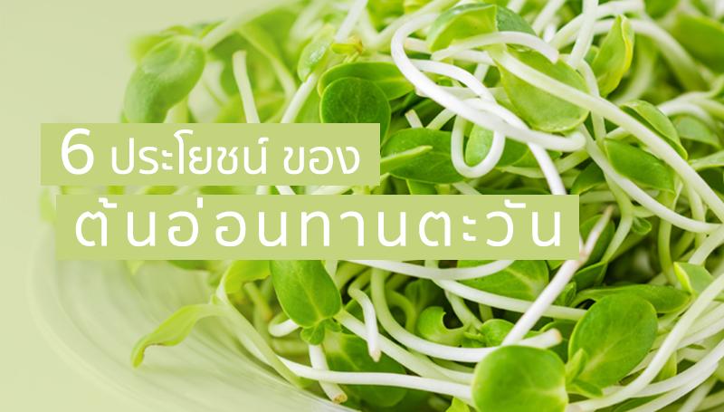 ต้นอ่อนทานตะวัน ผัก อาหารคลีน อาหารเพื่อสุขภาพ