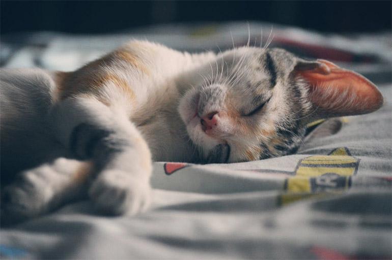 การนอนหลับ พักผ่อน หลับ