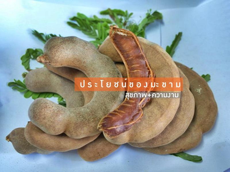 tamarind ผลไม้ มะขาม