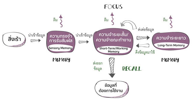 สมองเราจัดเก็บความทรงจำผ่านกลไก Memory – Focus – Recall