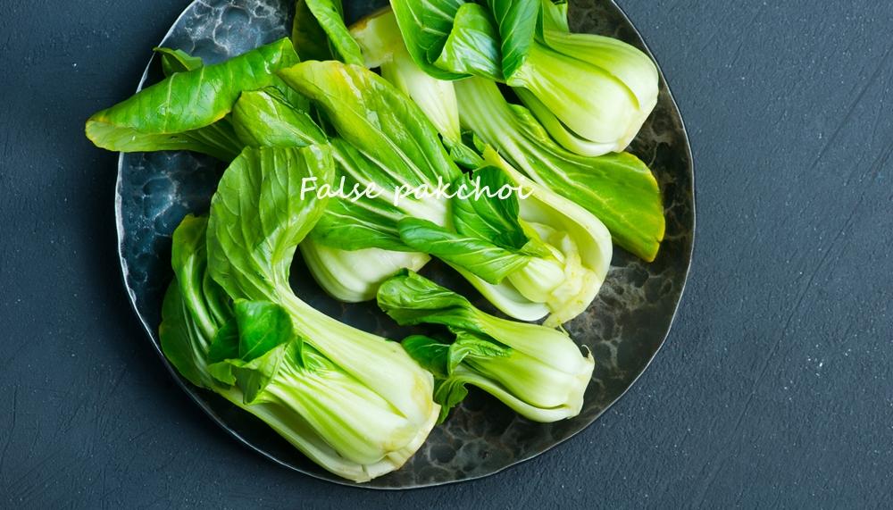 ดูแลสุขภาพ ผักกวางตุ้ง สมุนไพร