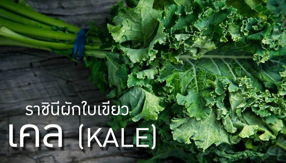 คนรักสุขภาพ ผัก ผักใบเขียว สร้างสุขภาพดี