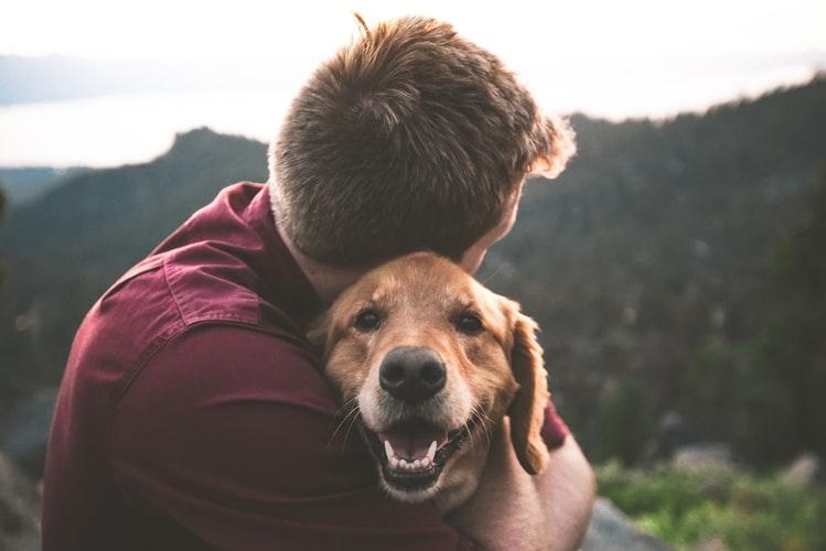 โรคพิษสุนัขบ้า - การฉีดวัคซีนป้องกันพิษสุนัขบ้า